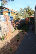 Before - Biodiverse garden