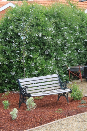 Bench beneath the potato vine