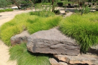 Lomandra rock garden