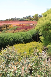 Cranbourne native gardens