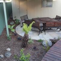 Tree fern creates enclosure
