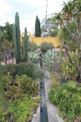 Cactus and succulent garden water feature