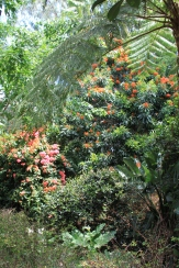 Colourful tropical trees