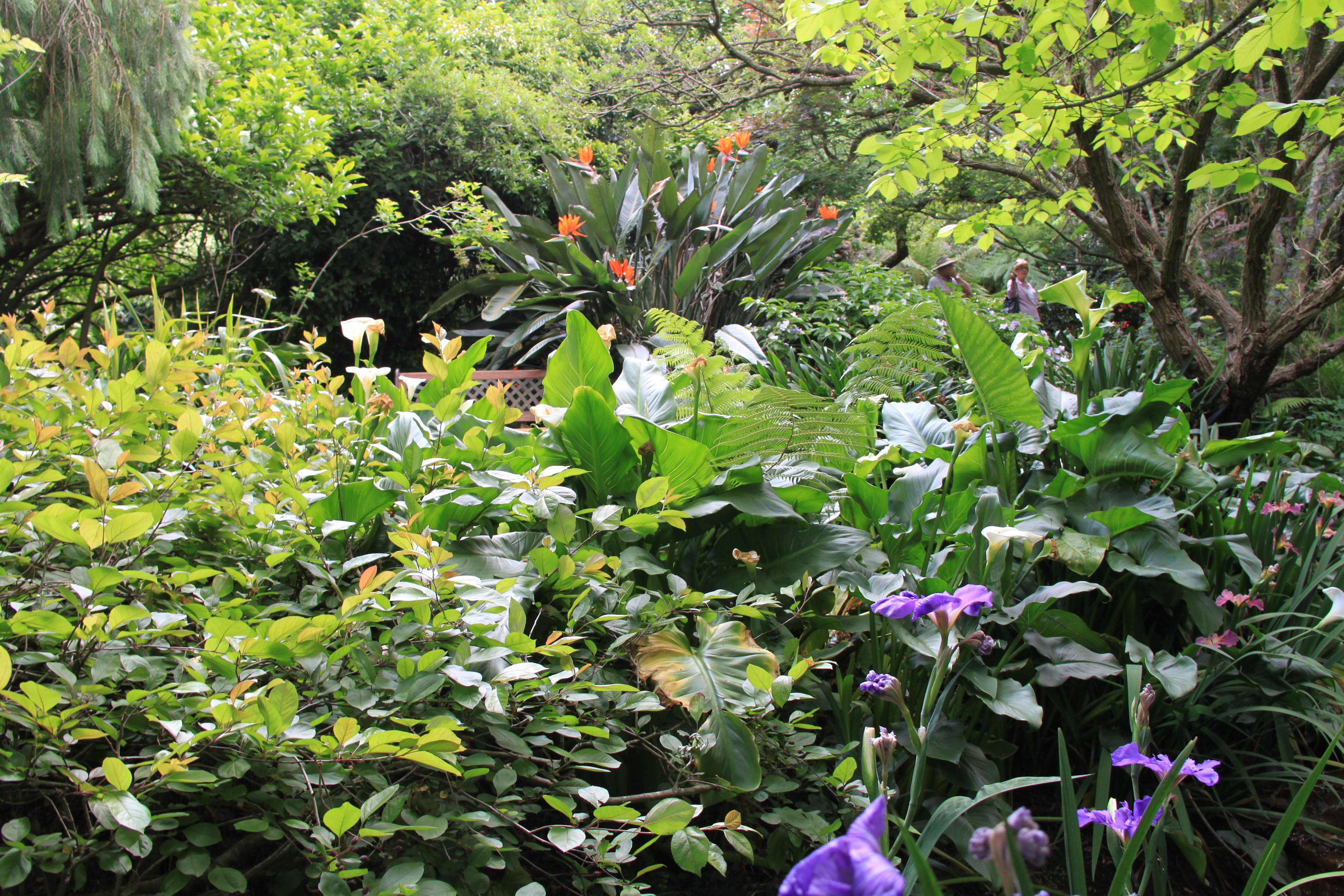 galston open gardens  u2013 janna schreier garden design