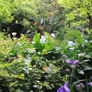 Bill Flemings 'Elegans' - contrasting plant textures