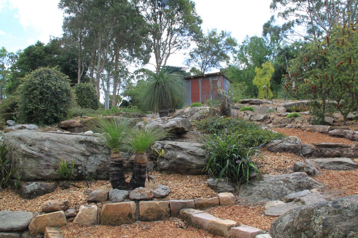 Australian native garden janna schreier garden design for Garden design jobs sydney