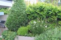 Citrus, Bay, Dietes, Box, Gardenia, Rosemary, Star jasmine
