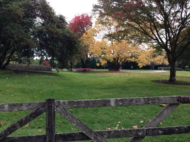 Gorgeous autumn colours beyond the gate