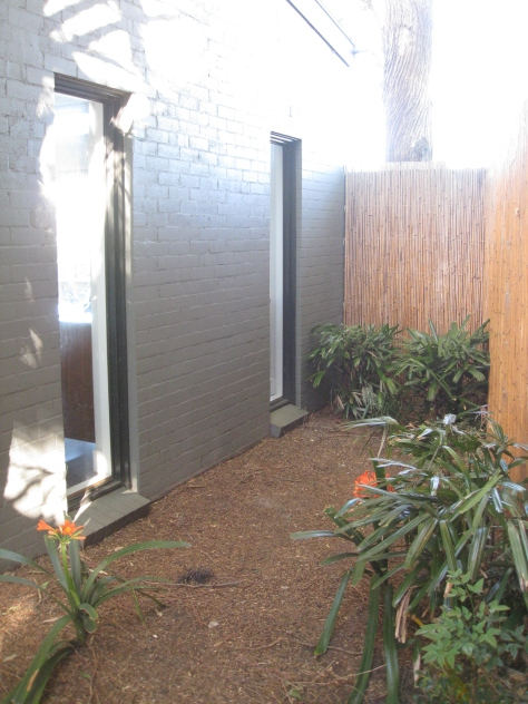 A garden suffering from soil depletion due to a nearby gum tree