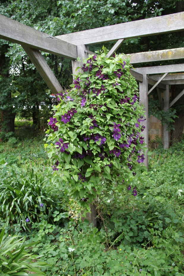 Bowylie - Pergola with Clematis climber