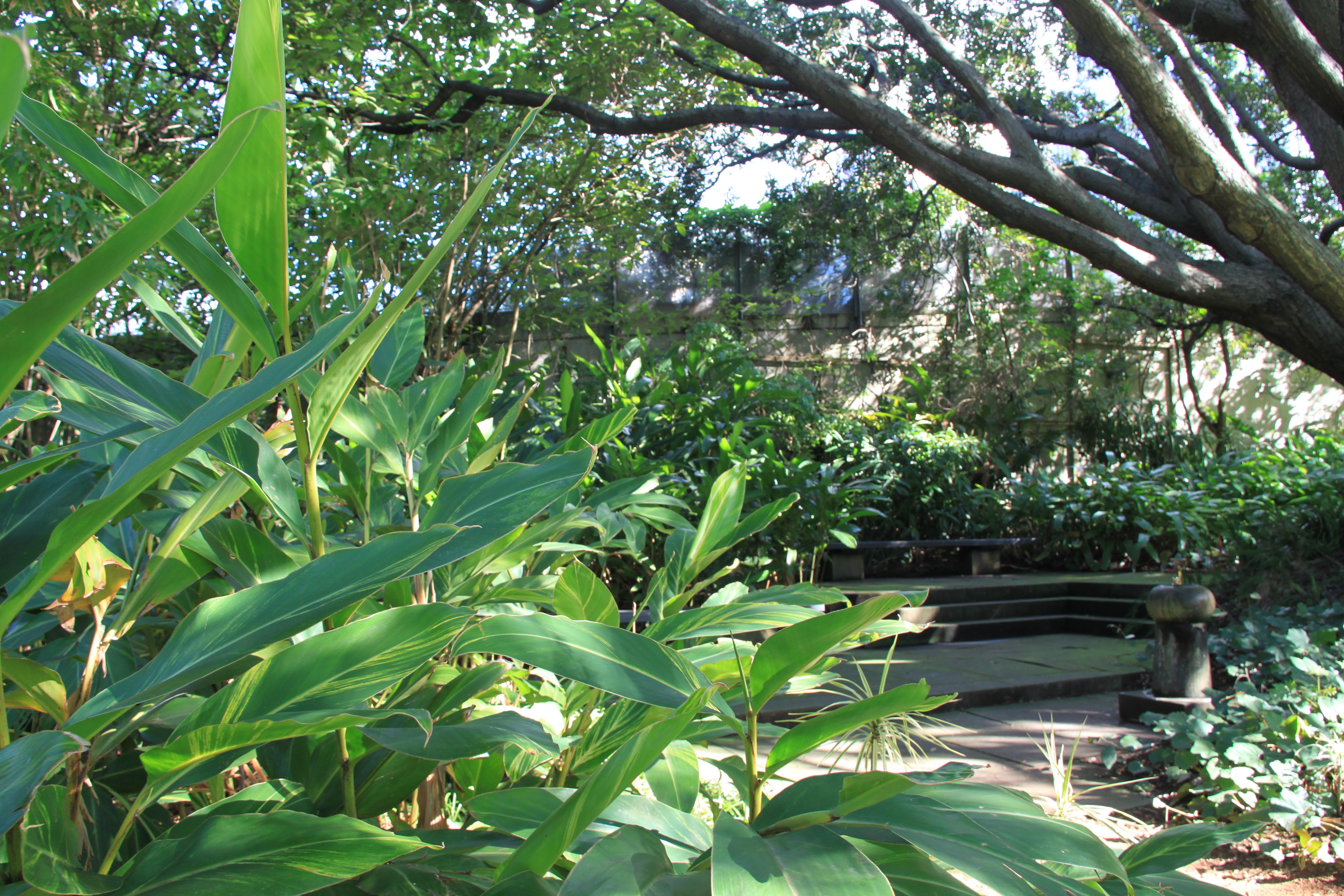 Sydney Garden Inspiration Janna Schreier Garden Design