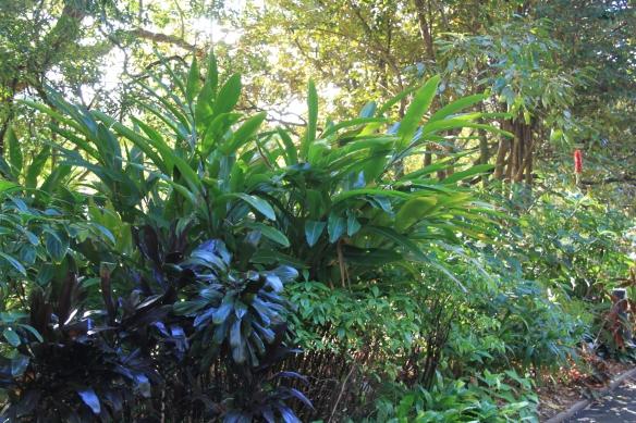 sydney garden inspiration