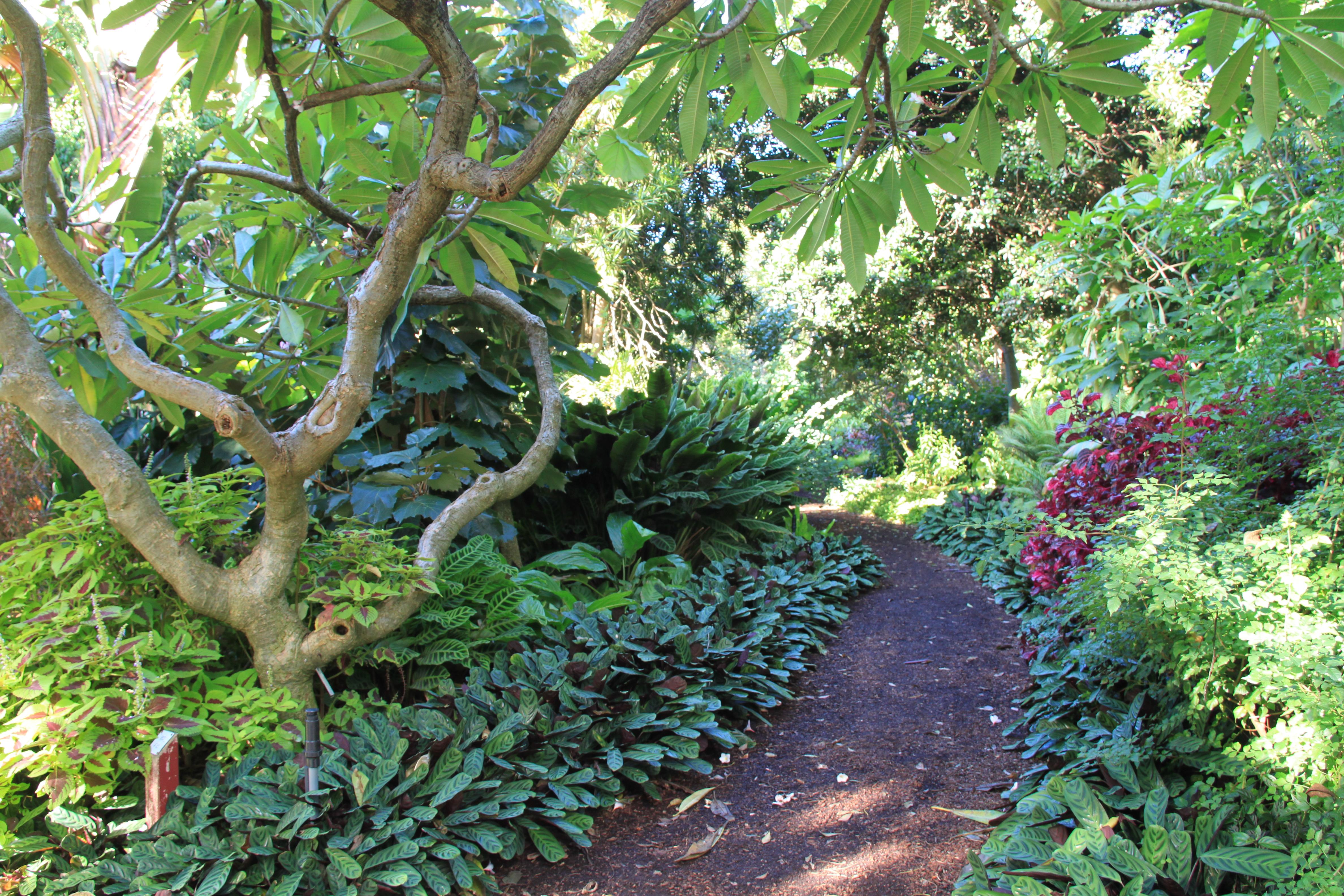 Sydney Garden Inspiration - Janna Schreier Garden Design