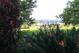 Sydney Botanic Garden - View past the Bird of Paradise (Strelitzia reginae) to the harbour
