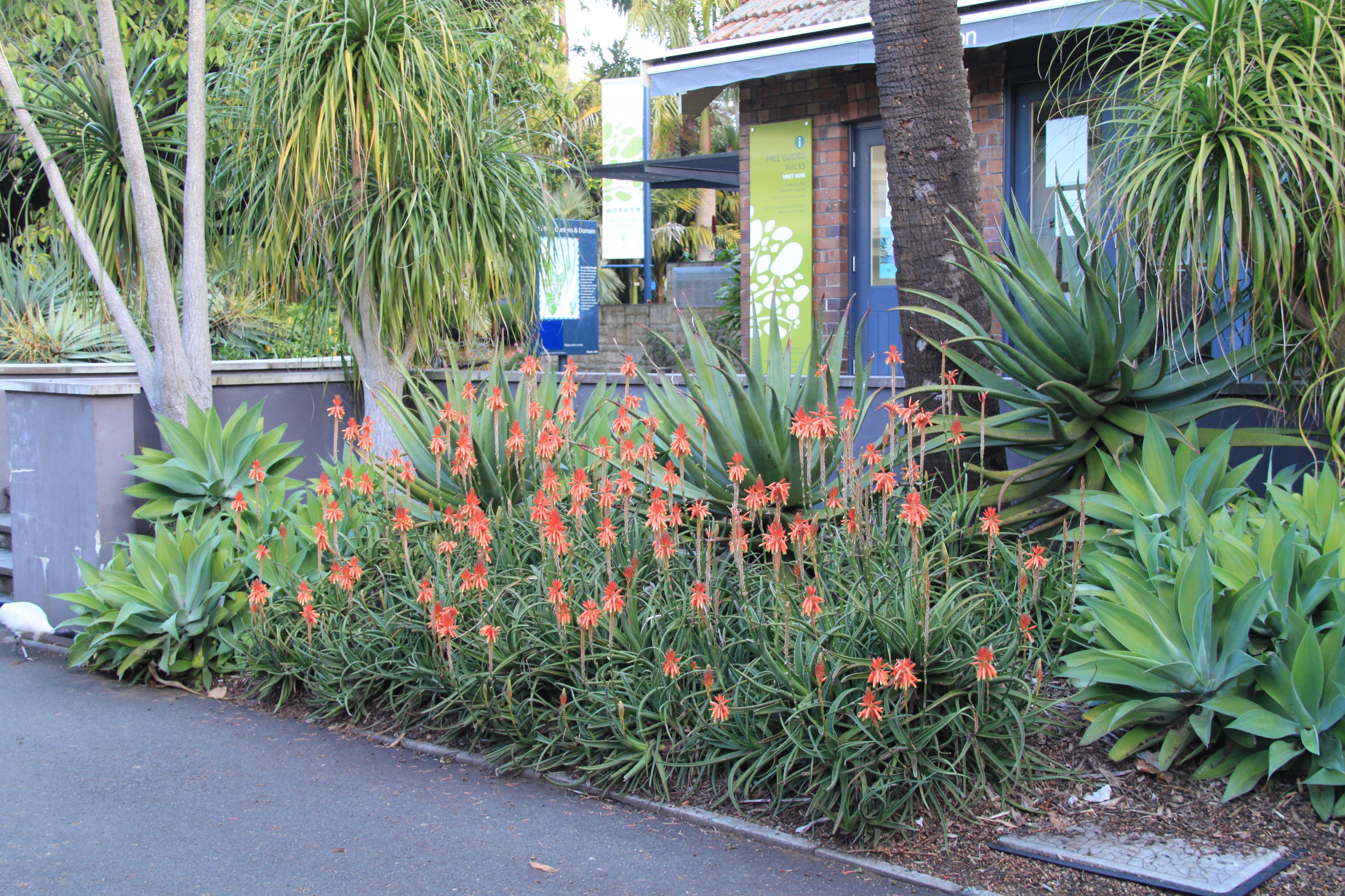 Sydney garden inspiration janna schreier garden design for Low maintenance tropical plants