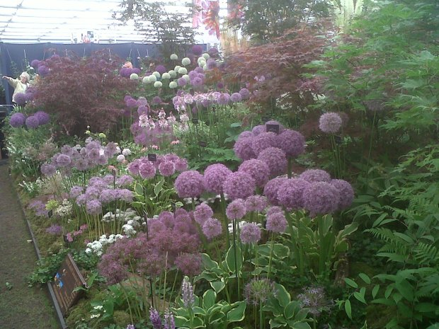 Chelsea Flower Show - Alliums continue to be a very popular feature in gardens and you can see exactly why here