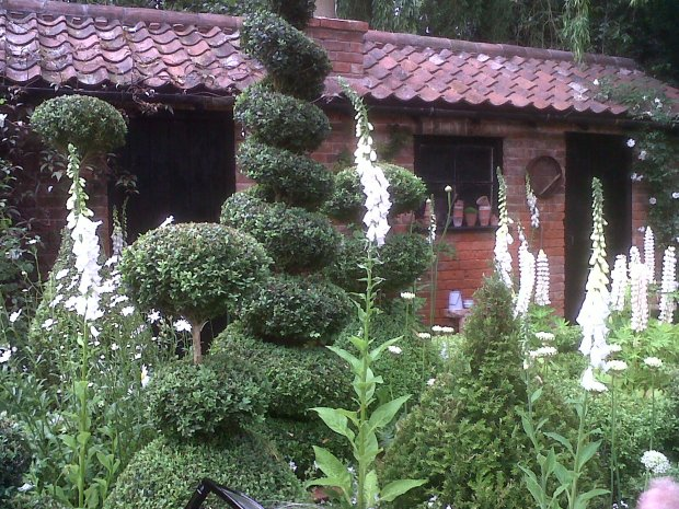 Chelsea Flower Show - Spiral Topiary with foxgloves and lupins