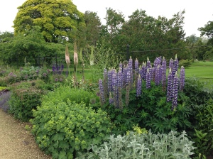 Lupins, Alchemilla mollis, Stachys byzantina, Alliuims, Nepeta and Eremurus at Woburn Abbey Gardens
