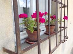 Geranium window pots