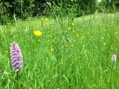 English meadow at Waddesdon Manor, England