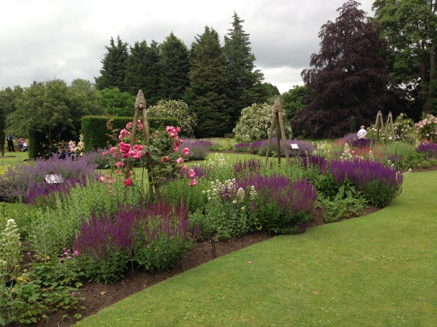 Roses and Saliva borders at the Cambridge University Botanic Garden