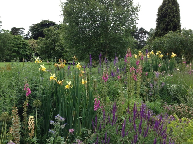Iris and Salvia, Foxgloves and Eryngium at the Cambridge University Botanic Gardens