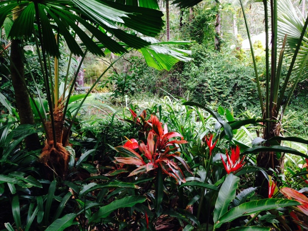 Subtropical textures and colours