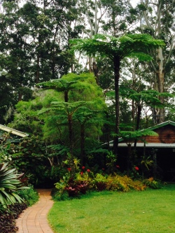 Tree ferns and anthuriums