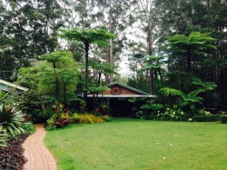 Giant tree ferns at the back of Stringybark cottage