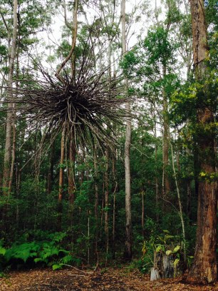 A striking sculpture hung between two trees