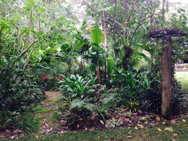 Meandering pathways through the subtropical garden