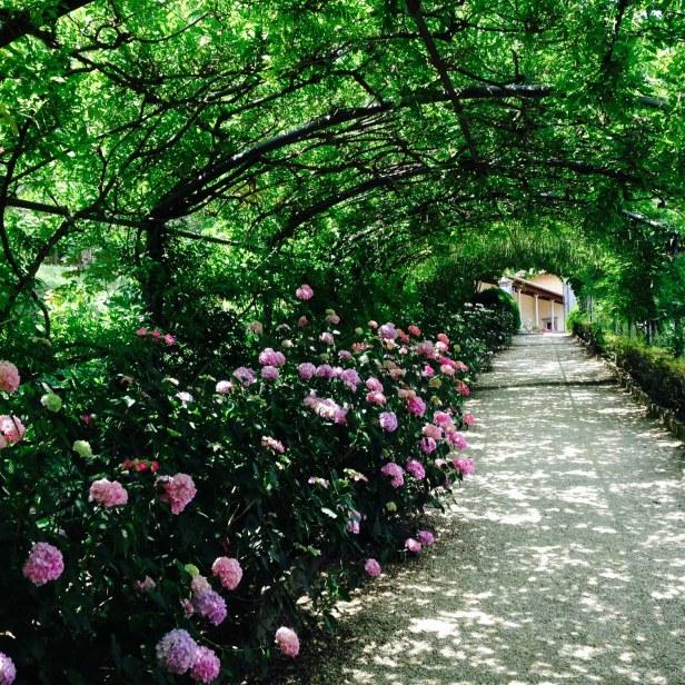 Hydrangea walk