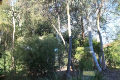 Native residential garden in Canberra