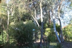 Native residential garden in Canberra