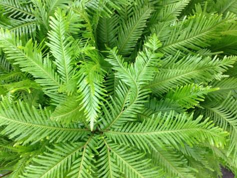 Latest trend in garden design ferns janna schreier for Garden design fest 2014