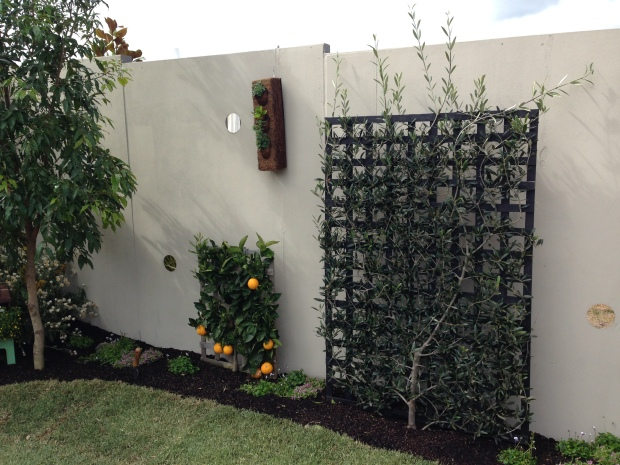 Espaliered citrus and olive by NGINA at the Australian Garden Show Sydney 2014