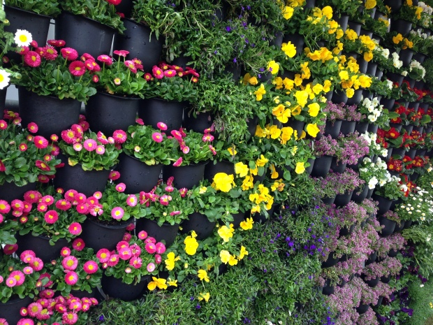 Small, pretty annuals make up this colourful vertical garden at the entrance to the Australian Garden Show Sydney 2014