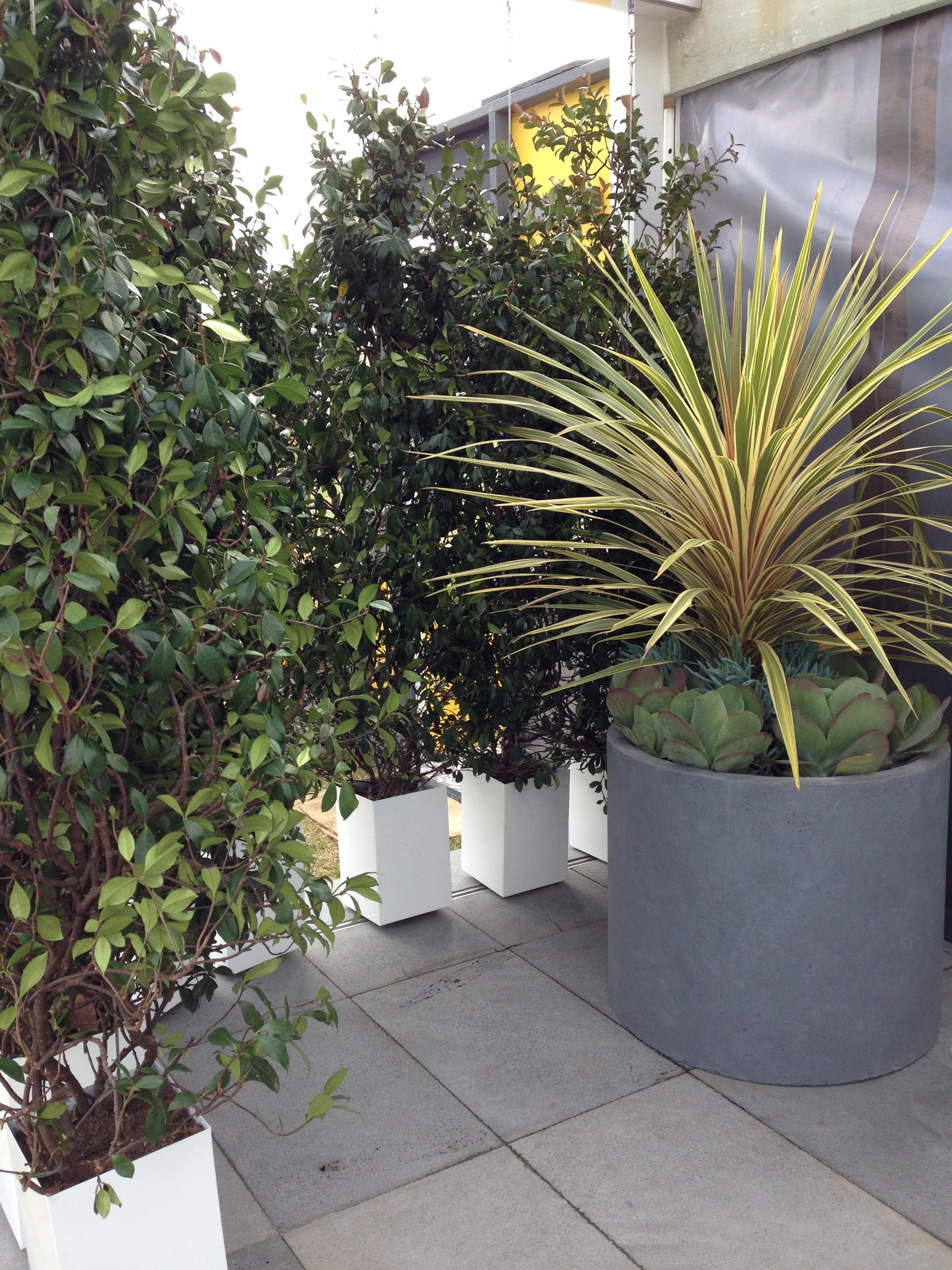 vertical gardens do or don t janna schreier garden design. Black Bedroom Furniture Sets. Home Design Ideas