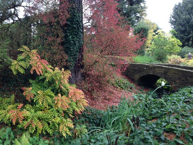 Bright autumn colours of Mahonia at Hidcote