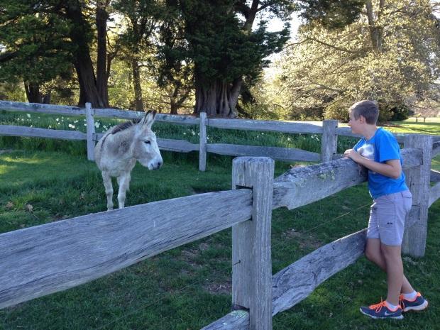 Donkey at Retford Park