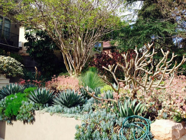 Wonderful contrasting textures and complementary soft colours in this north facing garden