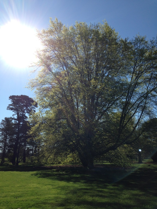 Large, established trees at Retford Park
