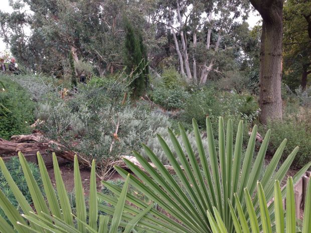Mediterranean Garden at Wisley