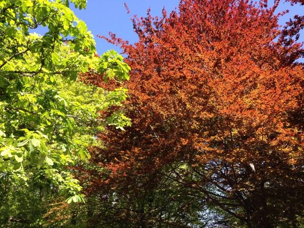 Mount Wilson tree colour