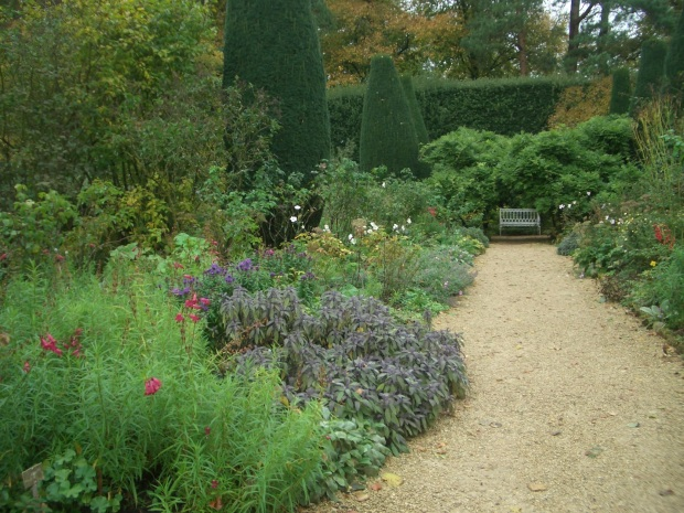 Penstemon and asters in the Long Walk at Hidcote