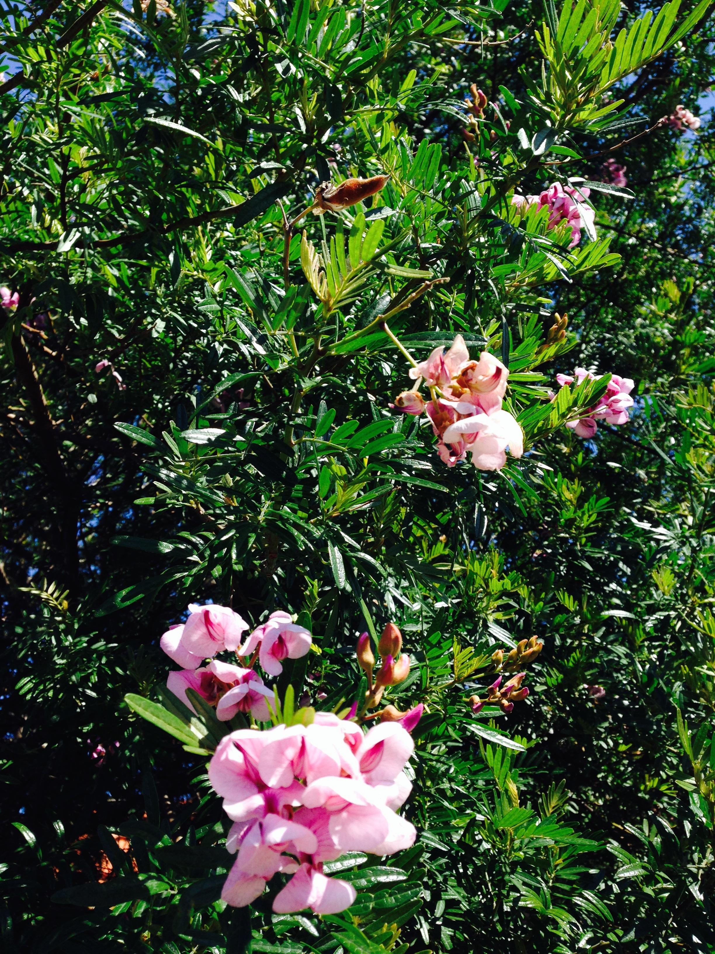 Top 10 Spring Flowers For Sydney Janna Schreier Garden Design