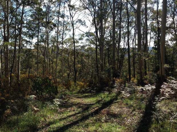 Plot for sale at Mount Wilson