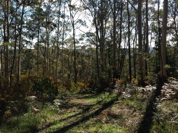 the best place to garden in australia   u2013 janna schreier garden design