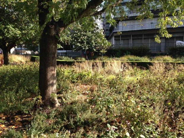 Potters Fields Park Piet Oudolf Plantings, London