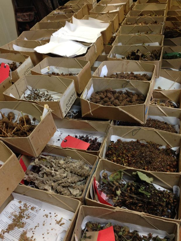 Hundreds of varieties of seed are collected and stored each year